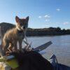 La storia del coyote Yip Yip