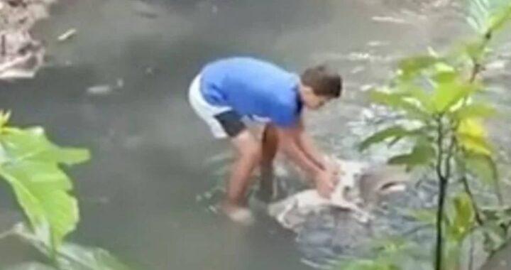 Bambino salva un cane caduto in un canale, il video è commovente