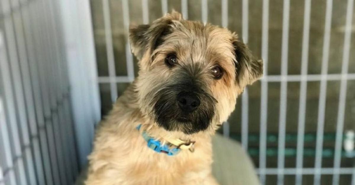 cane di 10 anni del rifugio