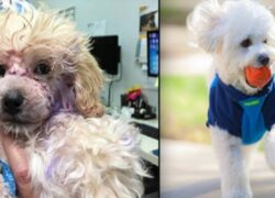 cane abbandonato adottato