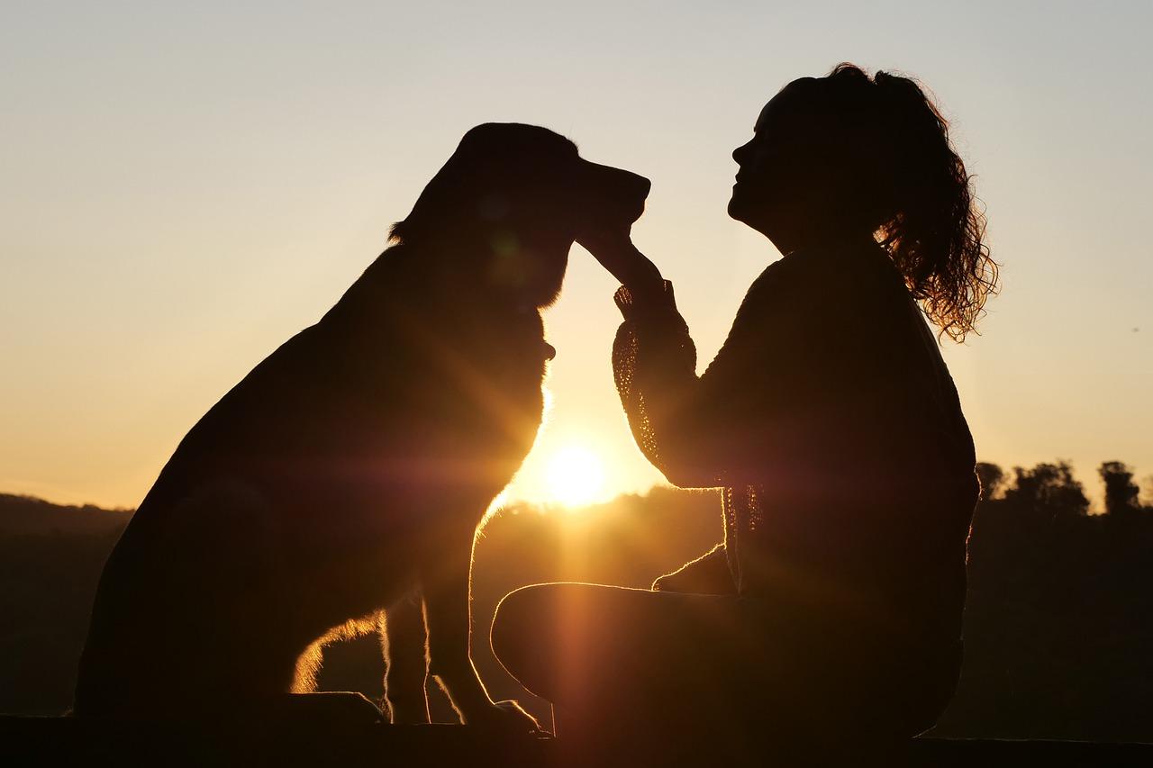 Cane abbandonato salva tre vite