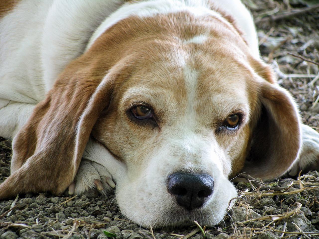 Cane di 12 anni salvato