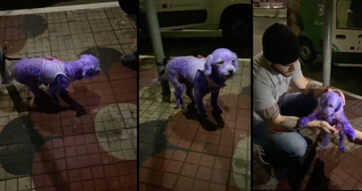 cucciolo dipinto di viola