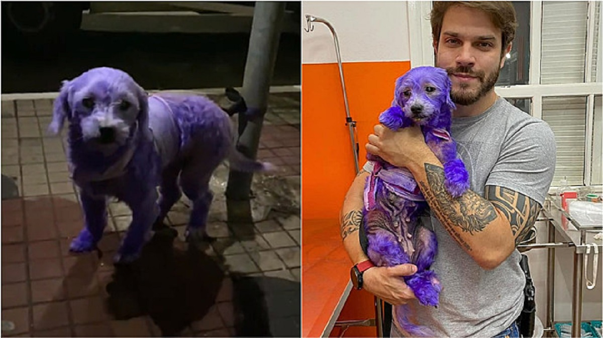 Cane dipinto di viola