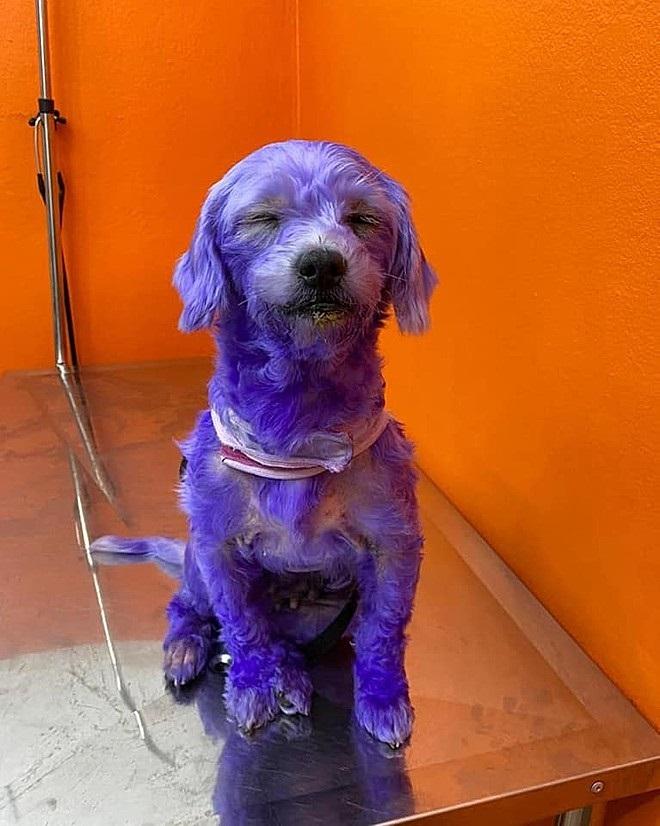 La cagnolina di nome Susy
