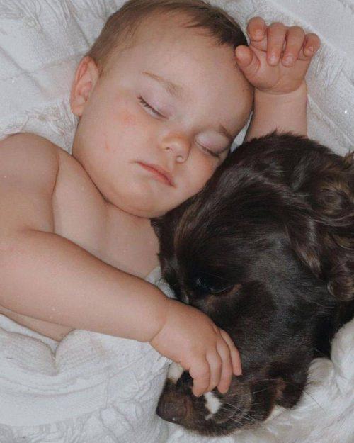 Cuccioli che riposano insieme