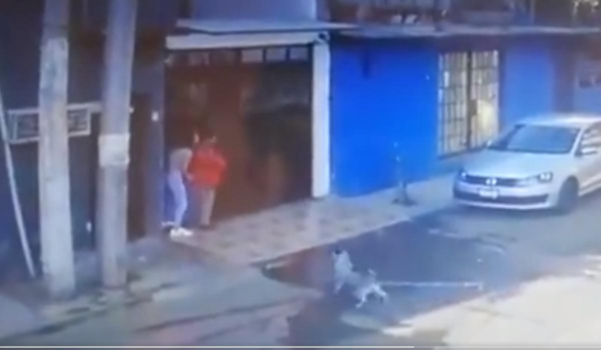 Il video del cane eroe