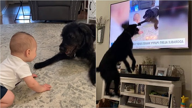 Bronn si rivede in tv