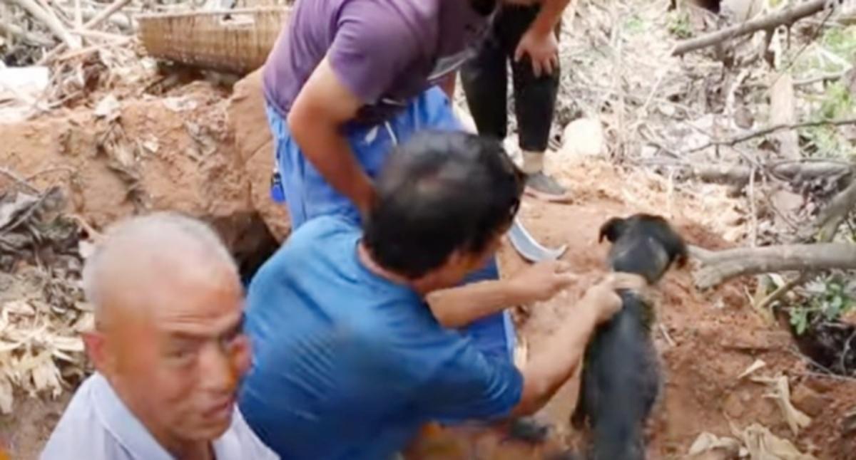 Il video del cane intrappolato