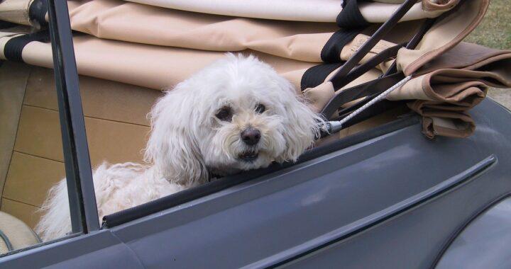 cane investito non è morto