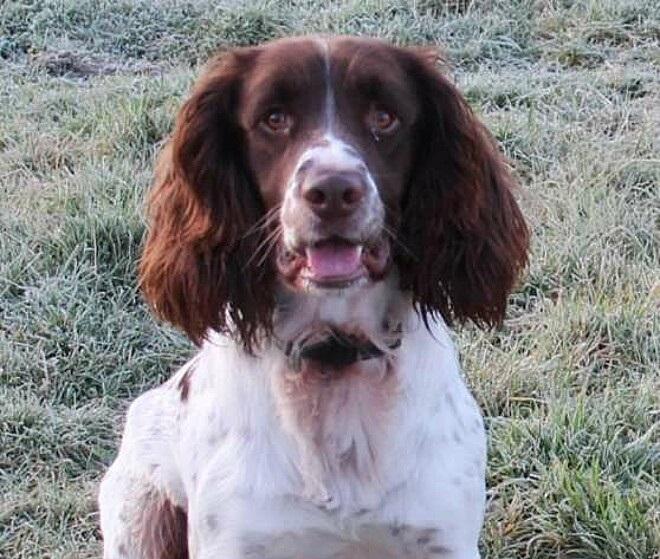 Max il cucciolo scozzese