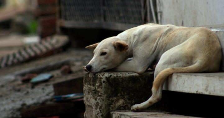 Senzatetto cade sui binari: salvato da un cane randagio
