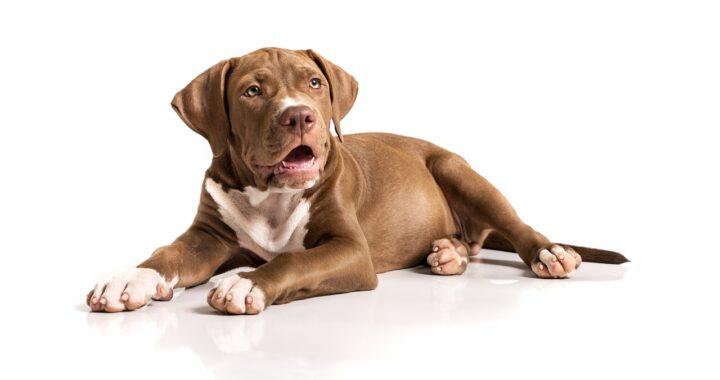 cane randagio vittima di incidente