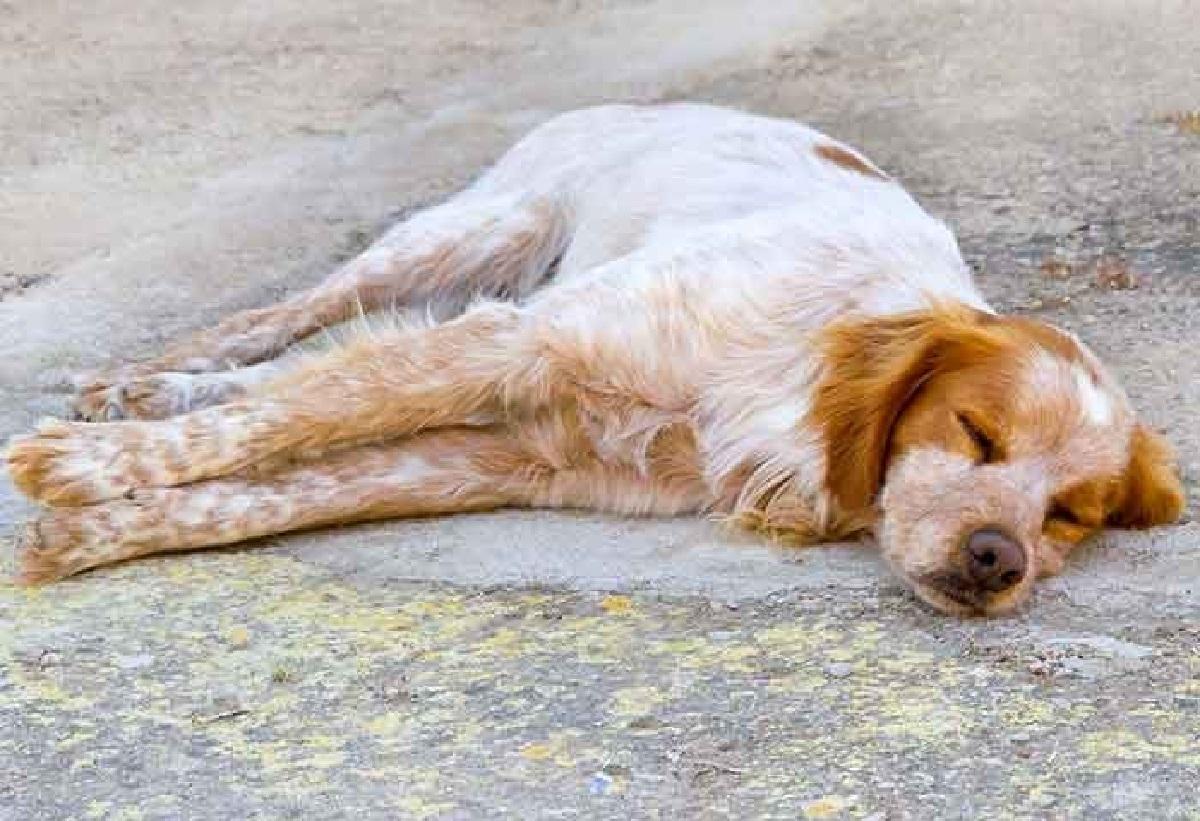 Cane sopravvive da solo