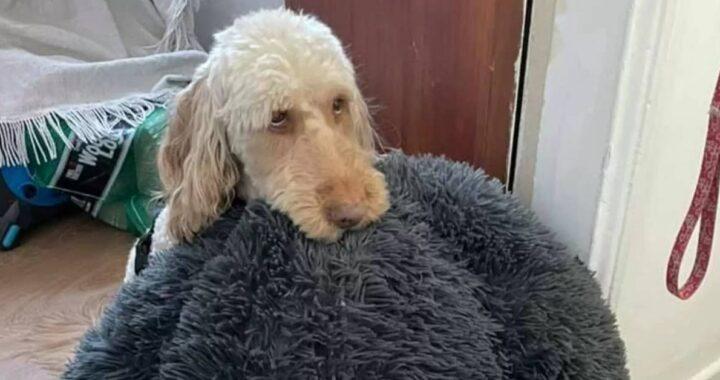 cucciolo con il letto in bocca