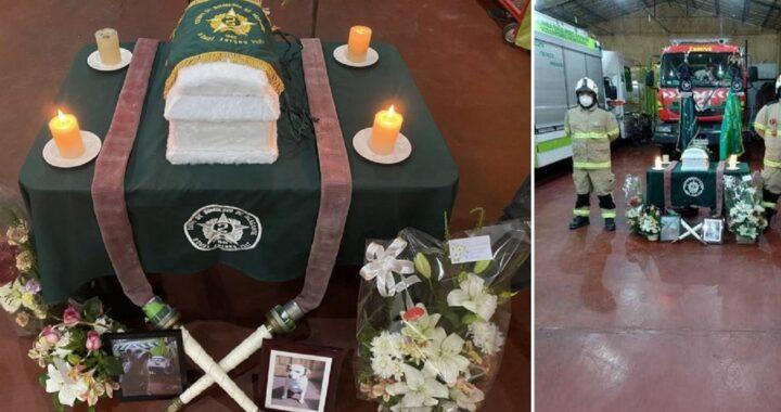 Cane vigile del fuoco muore