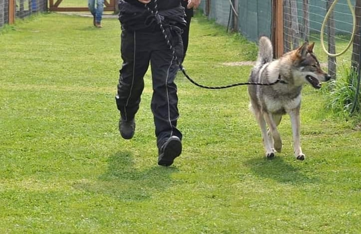 Denunciato addestratore di cani