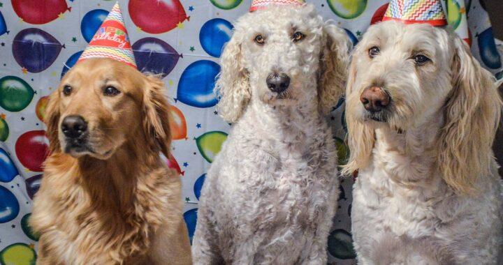 Pubblicano la foto del compleanno del cucciolo e vengono travolti dalle polemiche