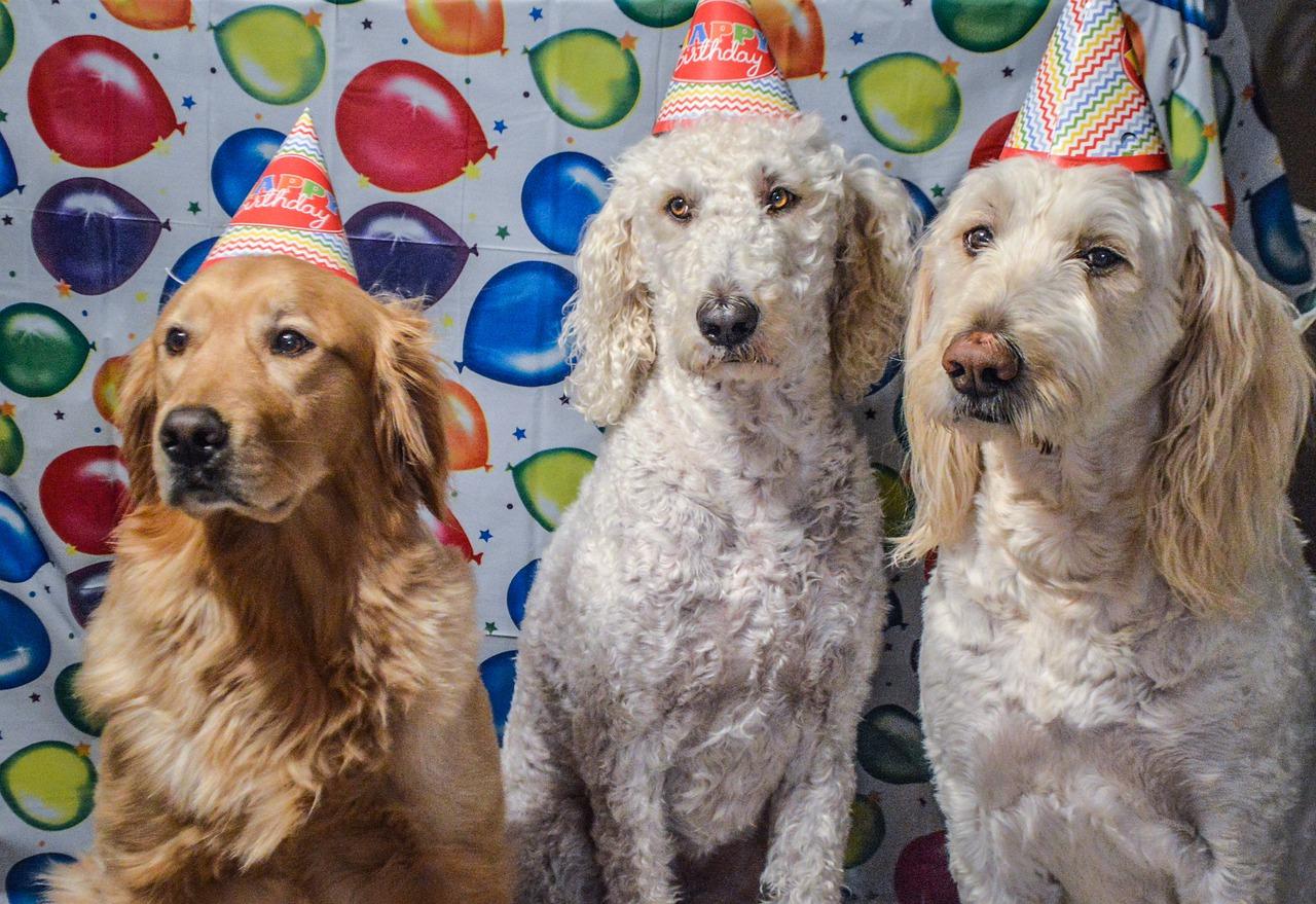 Compleanno del cucciolo