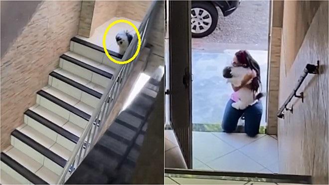 Cucciolo corre ad abbracciare la ragazza
