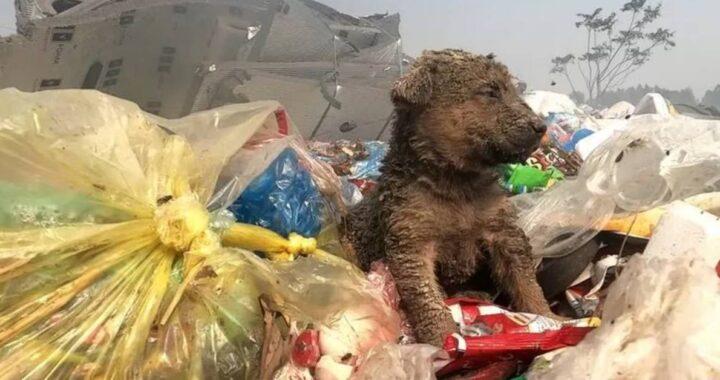 Cucciolo gettato tra i rifiuti chiede disperatamente aiuto ai passanti