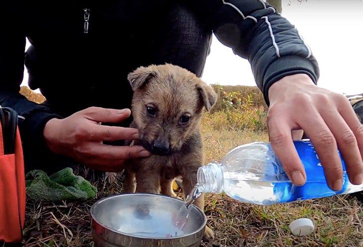 Le prime cure al cane salvato