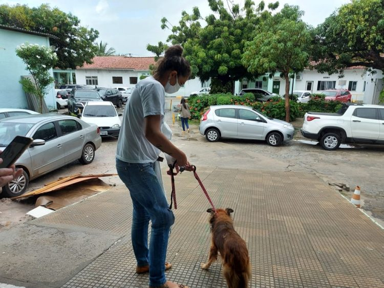 Cane rimasto solo