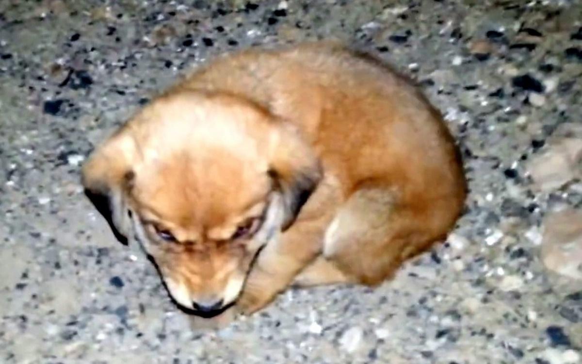 Cucciolo trovato per strada