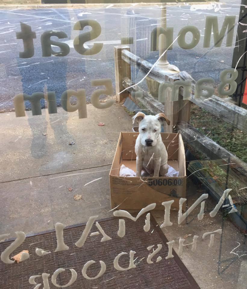 Claus il cane salvato dal rifugio