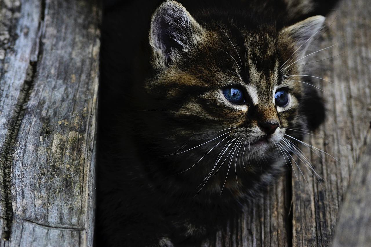Gattino bloccato in autostrada