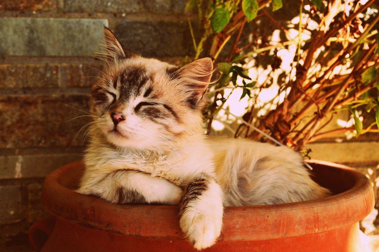 Gattino perde l'occhio