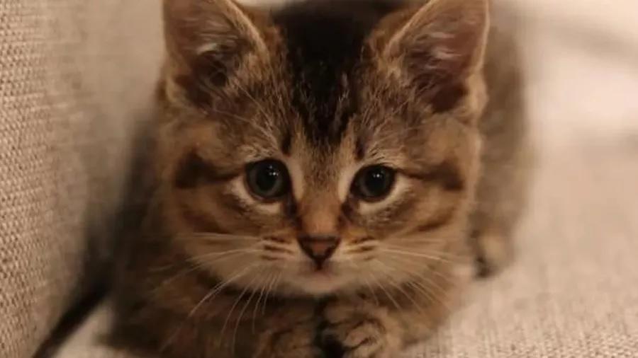 Lisa the tabby cat