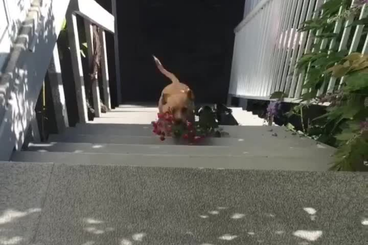 hugo fiori
