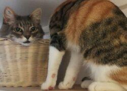 cesto e due gatti