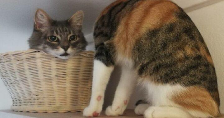 Il gatto senza testa crea scompiglio sui social poi il proprietario svela il trucco