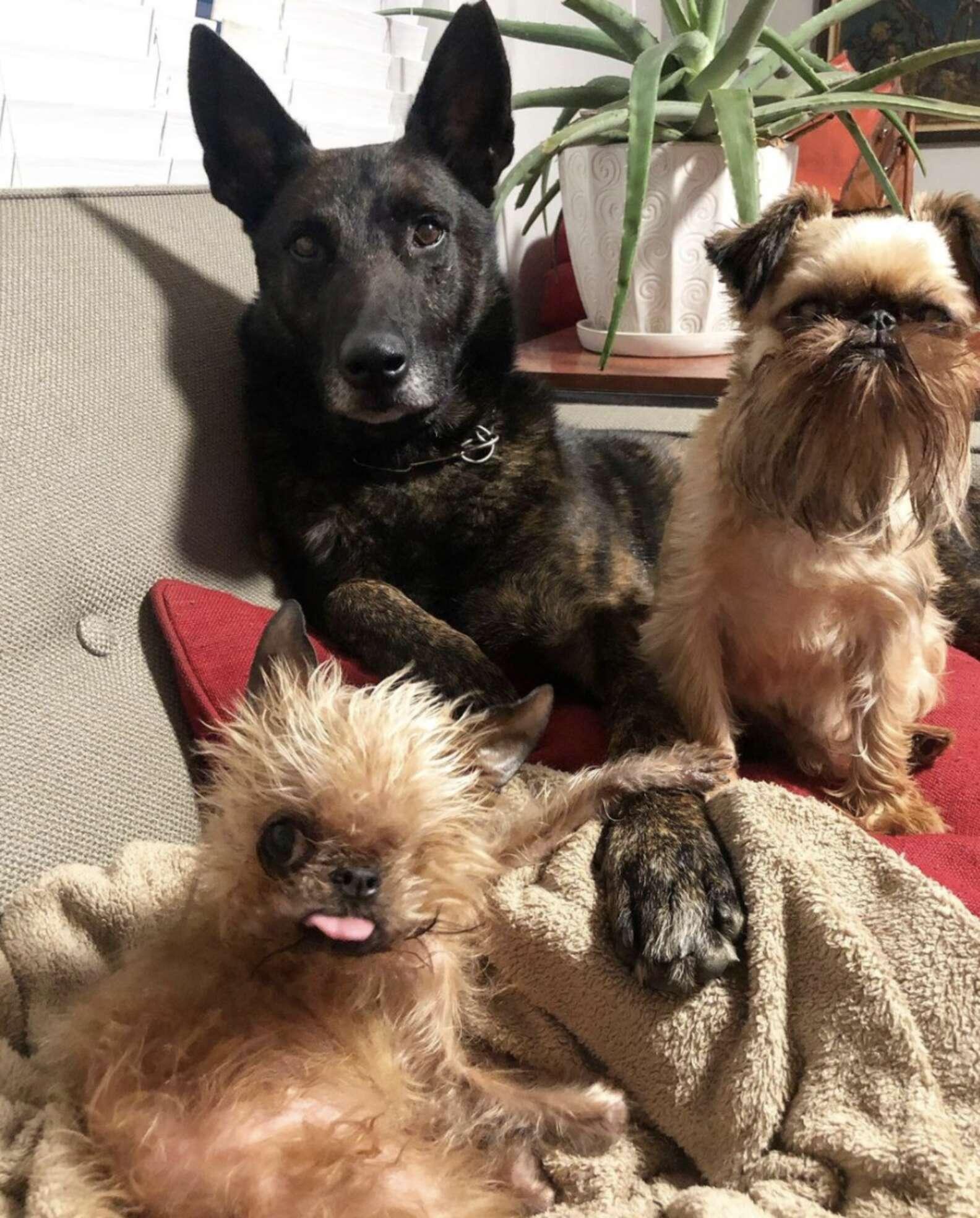 Meeps e i suoi amici