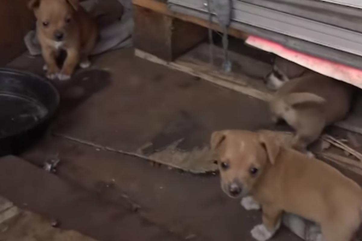 mamma cane cuccioli