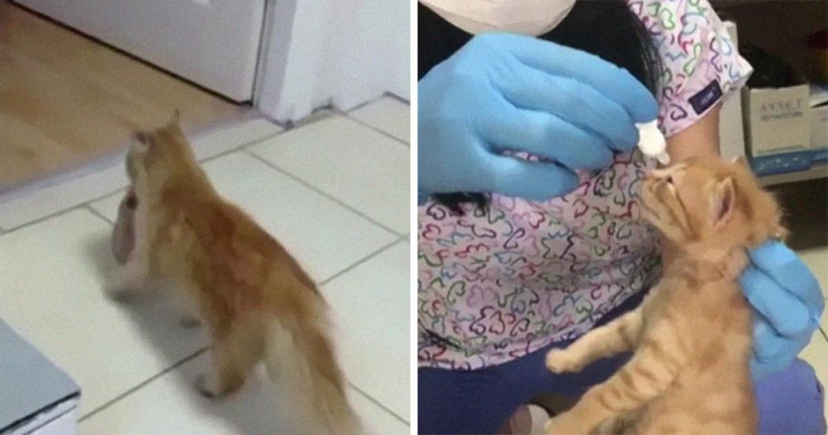 Mamma gatto entra in una clinica veterinaria