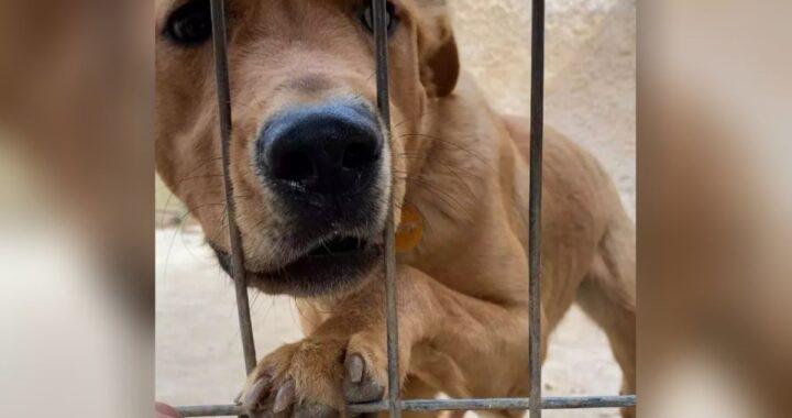 """Pacho è stato adottato e poi rispedito in canile dopo 3 giorni, perché un assurdo particolare non rispecchiava quanto detto: """"Ora si rifiuta di mangiare"""""""