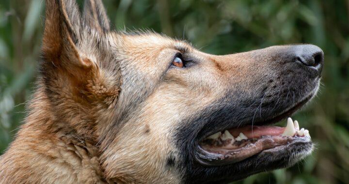 Il cucciolo si ammala gravemente e il suo proprietario è costretto a prendere una decisione