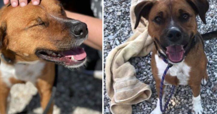 Lo hanno adottato dopo 420 giorni, ma lo hanno riportato subito al rifugio: ecco cosa hanno raccontato