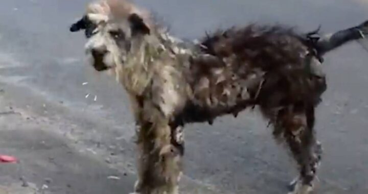 La trasformazione del cane di strada nel cucciolo più morbido del mondo