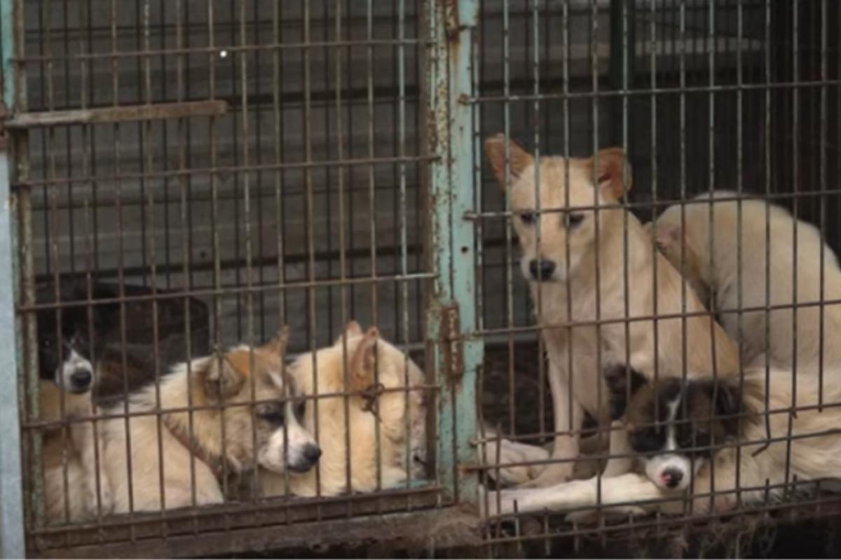 25 cani salvati