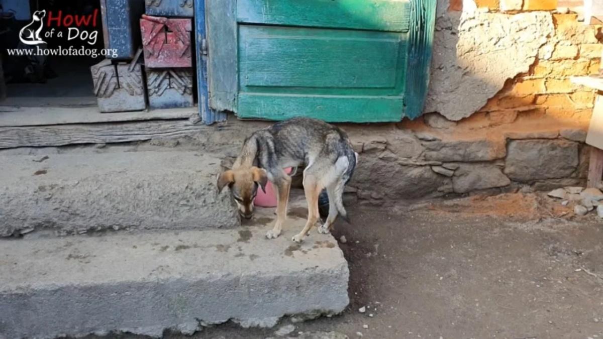 La storia della cagnolina Alma