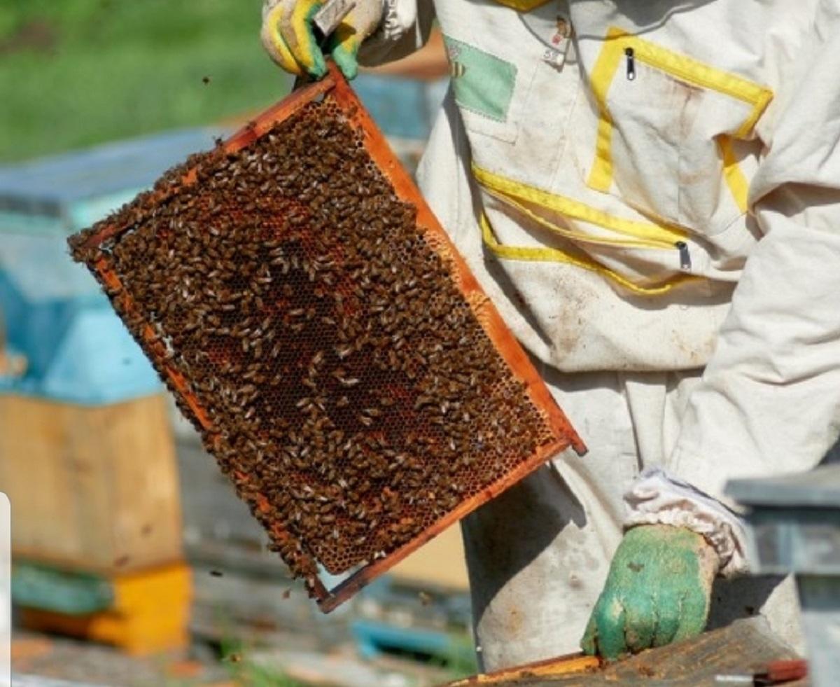 giovane apicoltore