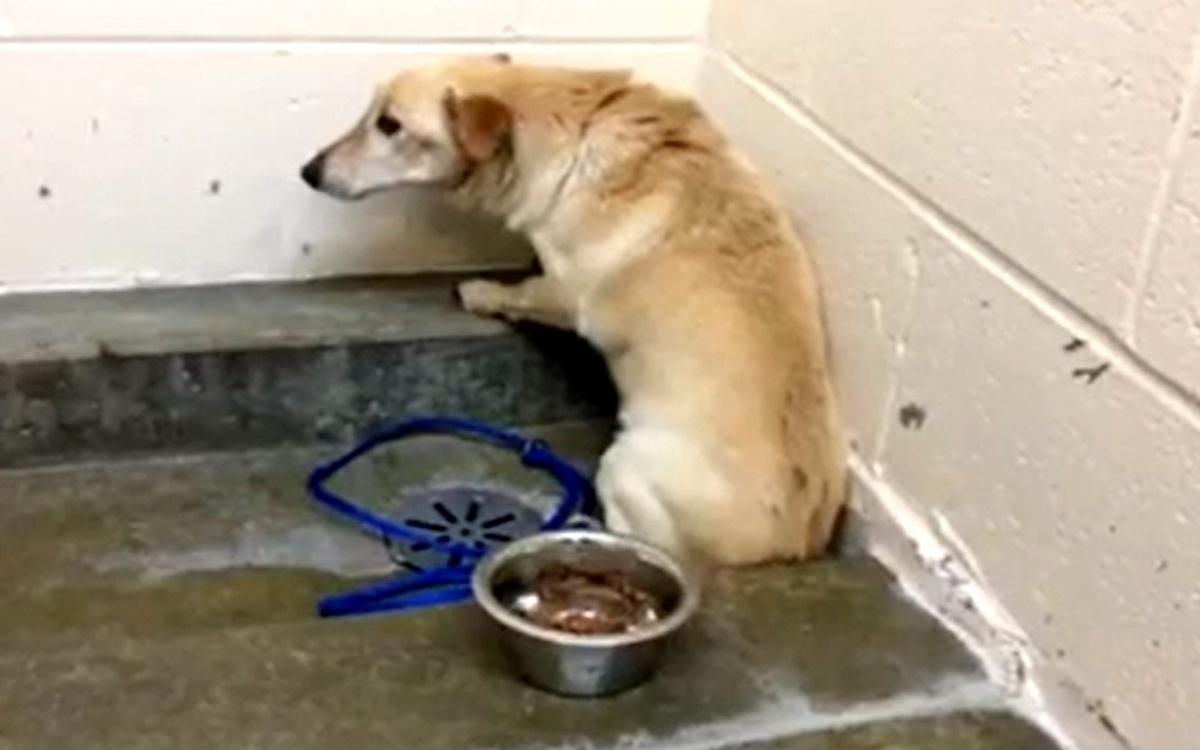 Volontari salvano l'anziano cagnolino Barkley
