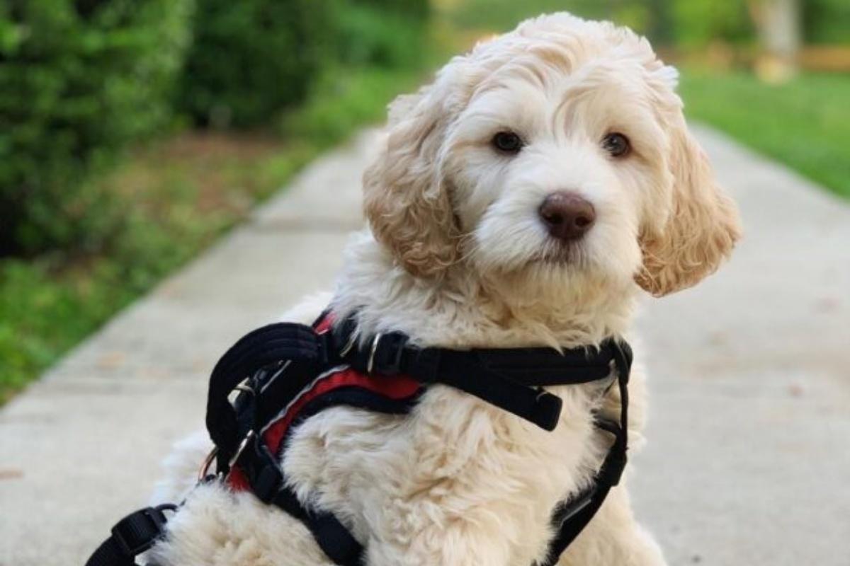 La splendida storia del cagnolino Benjamin