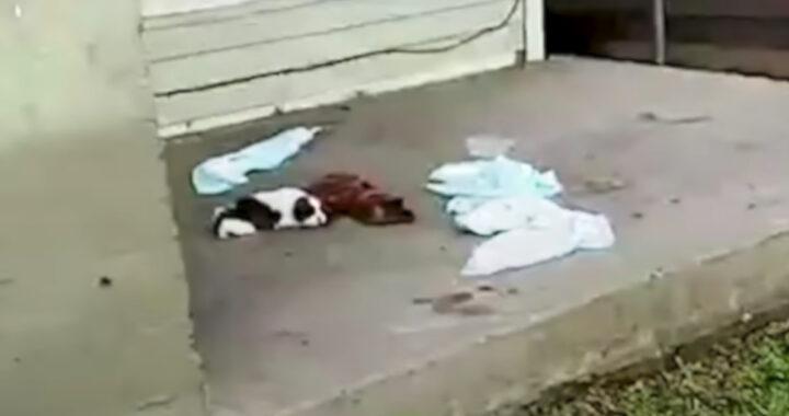 La storia del cane Bernard: giaceva nel portico di una casa abbandonata