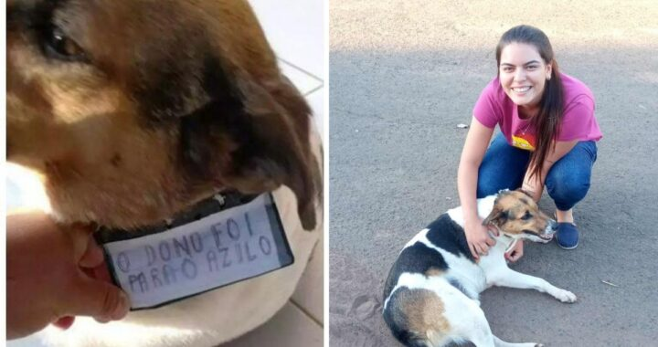 Il salvataggio e l'adozione del cane Betoven