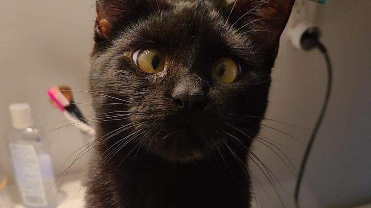 Il gatto Biglou